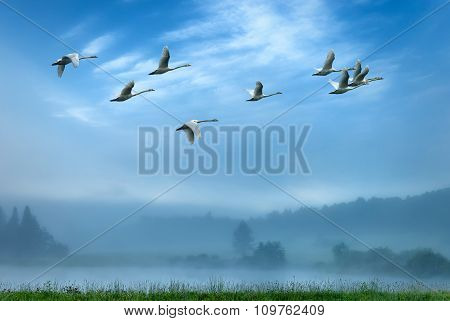 Cranes Flying In An Early Morning Mist