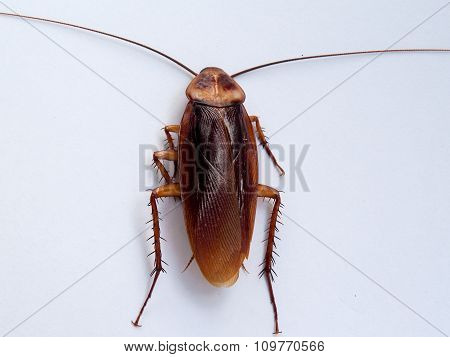 Cockroach , An Animal-borne Disease. And Nasty