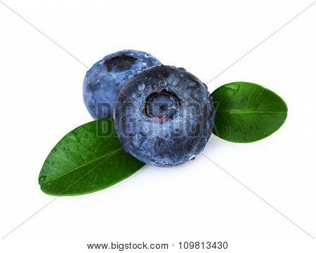 Blueberries Green Leafs
