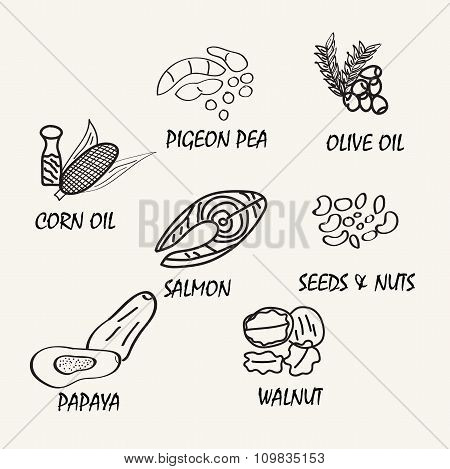 Line Drawing Natural Food. Vector Hand Drawing Food Elements For Education.