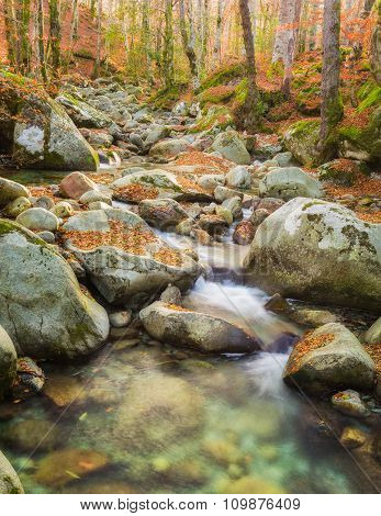 Woodland stream rushing over boulders covered with autumn leaves in the forest at Vizzavona in Corsica poster