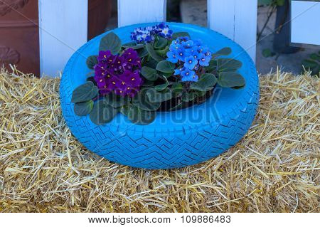 Flowers and plant in old tire painted pastel color