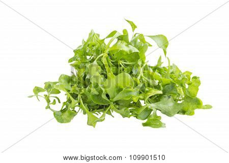 Organic Green Watercress Salad Ingredient