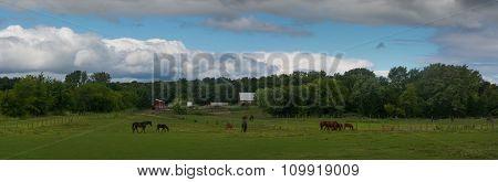 Horse Pasture Panorama