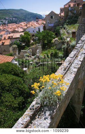 Wildflowers Growing On The Ruins Of Dubrovnik
