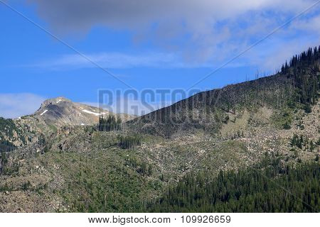 Green Trees And Bare Trees In The Mountains Of Independence Pass