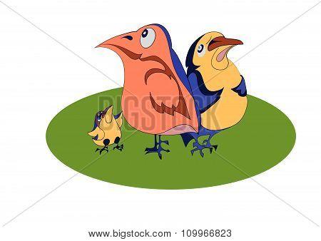 Three comical birds