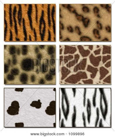 six wild african animal skin texture collections poster