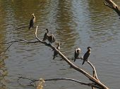 Five birds perched on a branch poster