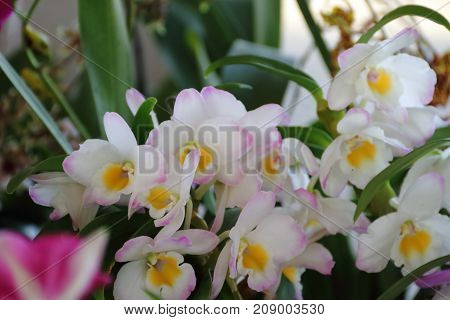 yellow orchids white lilacs bloomed in spring