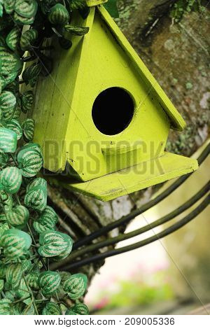 Wooden bird house is with the nature