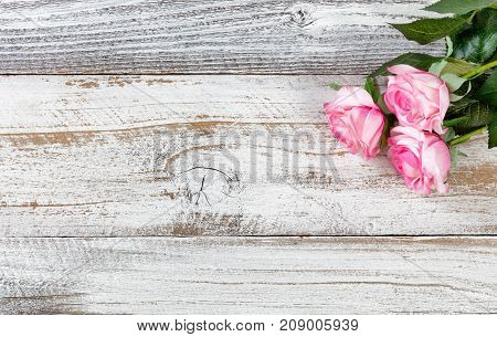 Mothers Day celebrated with pink roses on rustic white wood