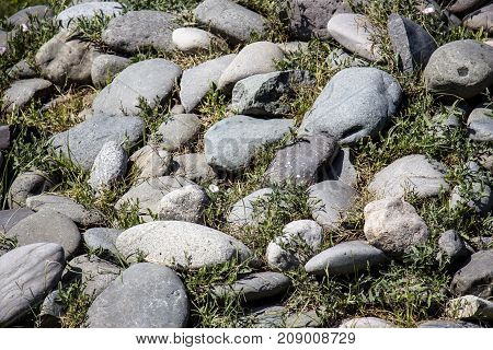 Sea stones overgrown with green grass on a summer morning
