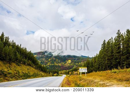 Migratory birds fly in flocks. The nature of the Rockies of Canada. The magnificent Highway 93
