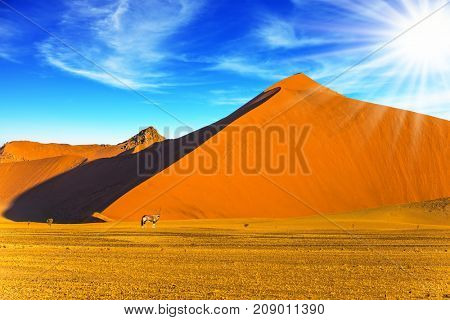 Namibia, South Africa. Sunset in the desert. Oryx standing at the dune. The concept of exotic and extreme tourism