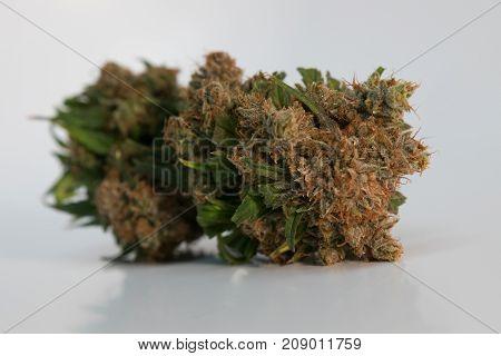 Isolated marijuana flower with a white background