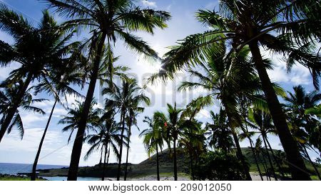 Palm trees on the Cook Islands in Polynesia