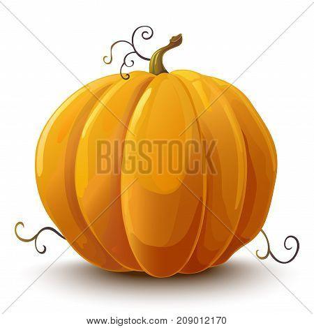 Pumpkin. Vegetable. Vector illustration. Pumpkin on white background.