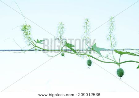 squirting cucumber on gradient blue sky background