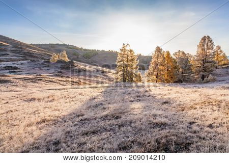 Morning Fog in Mountains. Hoarfrost on Grass and Trees. Altai. Siberia