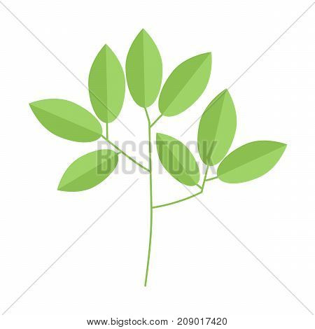 tree branch with leaves on white background