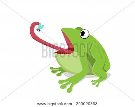 Green frog eat insect on white cartoon vector design