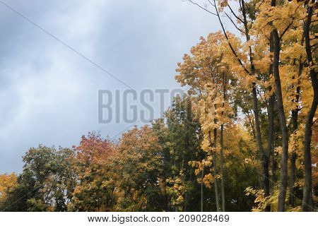 Trees with multi-colored leaves in autumn in the park