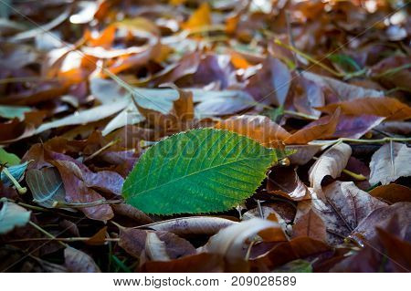 Autumn Leaves Close-up As Background
