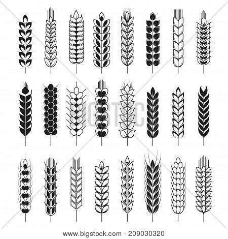 Spikelets icons or cereal wheat or rye ears and spike stalks. Vector isolated set for bakery or bread and farm flour product logo element template. Oat, barley or millet spikelet sheaf
