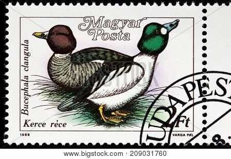 LUGA RUSSIA - OCTOBER 6 2017: A stamp printed by HUNGARY shows the Common Goldeneye - a medium-sized sea duck of the genus Bucephala circa 1988