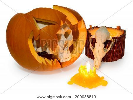 Halloween Ghost Human Skull Comes Out Of A Broken Pumpkin And Animal Skull Lit With Candle.
