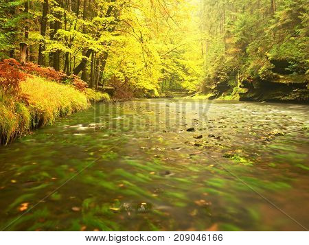River Bank Under Fall Trees At Mountain River. Fresh Autumnal Air In The Evening After Rainy Day,