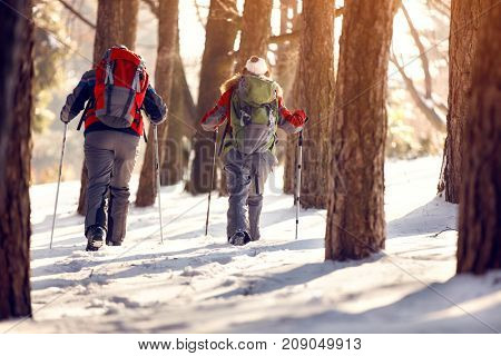Mountaineers with backpacks in sunny wood