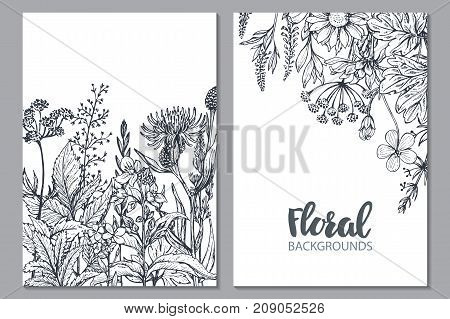 Floral backgrounds with hand drawn herbs and wildflowers. Monochrome vector illustration in sketch style.