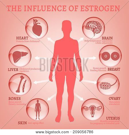 Estrogen effects Infographic image isolated on a light pink background. Female sex hormone and it s role in human body. Scientific, educational and popular-scientific concept.