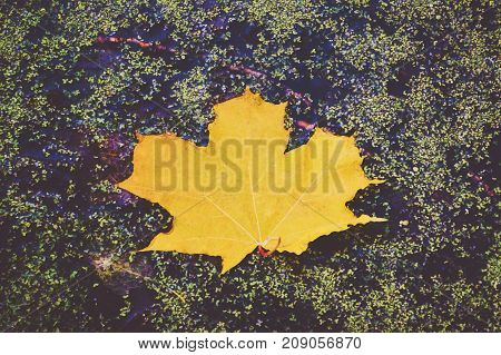 Green Maple Leaf In Autumn On A Background Of Water With Splashes