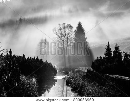 Foggy morning in the nature. Sun beams light through mist with tree silhouettes. Black and white image.