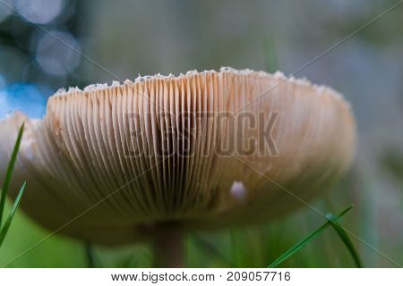 low angle view of an edible armlilaria mellea mushrooms