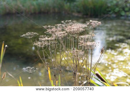 dried plants in front of a small pond