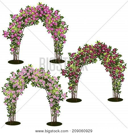 arches with bush clematis and green leaves on white background