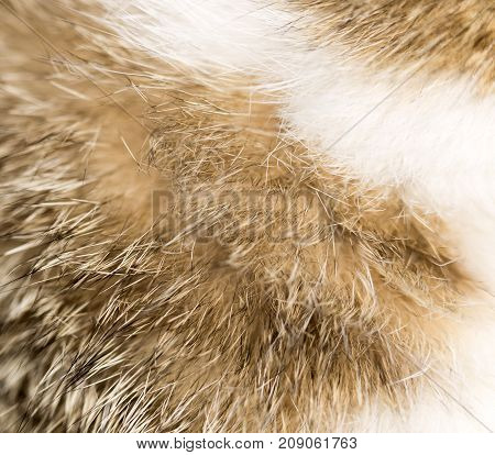background of fur animal . Photo of abstract background