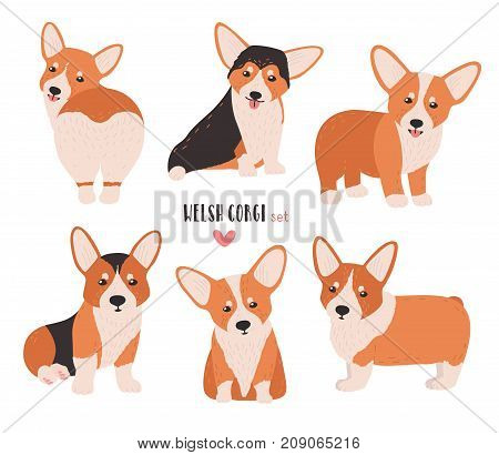 Set of welsh corgi in different postures. Small cute dog of herding breed isolated on white background. Funny pet animal in various positions. Flat cartoon character. Colorful vector illustration