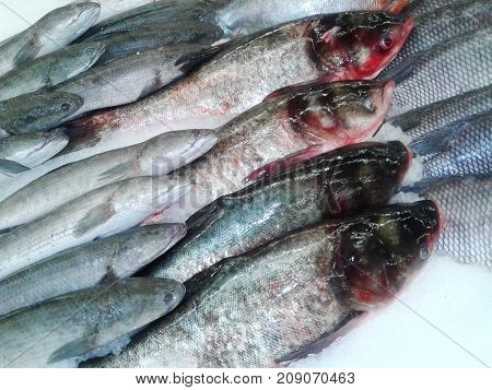 Fresh fish in the fresh market or supermarket cooled fish Fresh ice cooled hakes on a fish. on ice in the market Thailand. food