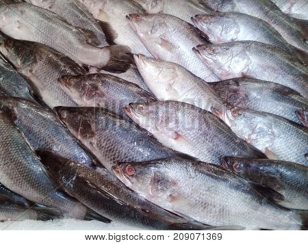 Sea bass in market with ice on ice on the market. ice cooled hakes on a fish. on ice in the market Thailand. food