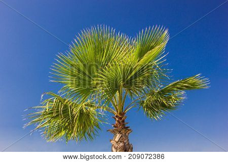 palm branches against the blue sky clear day