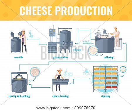 Cheese production cartoon infographics on white background with processing line including milk pasteurization, product ripening, vector illustration