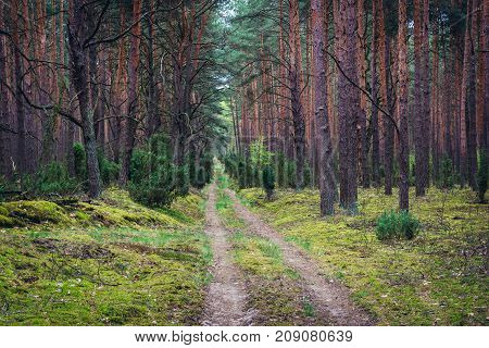 Forest road in Kampinos Forest near Warsaw Poland