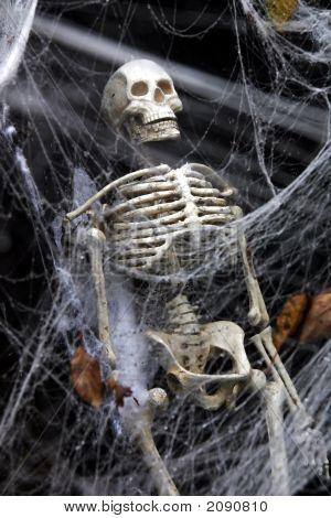 Skeleton In The Web