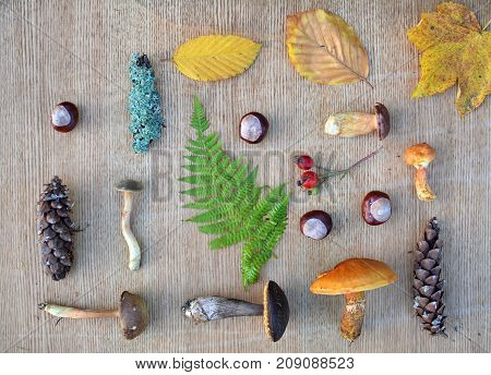 Flat Lay Composition Of Edible Forest Mushrooms And Leaves