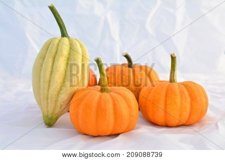 Group of pumpkins and squashes, acorn and Jack be little